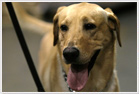 Brockton personal injury lawyers who can help Brockton, MA residents hurt by dogs