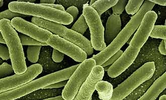 e coli that causes food poisoning